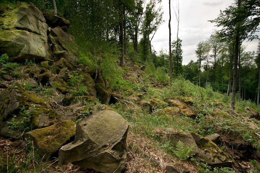 Foto z lesa
